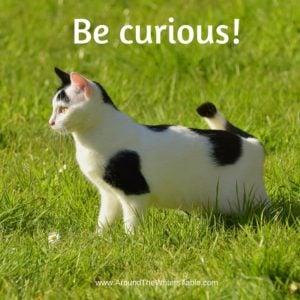 Be curious!
